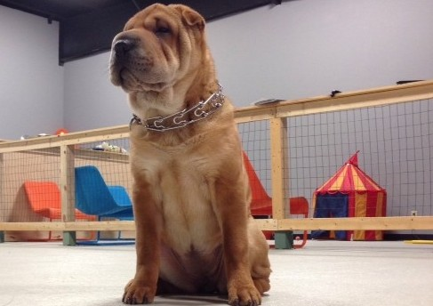 Dog Training Facility with Ginger