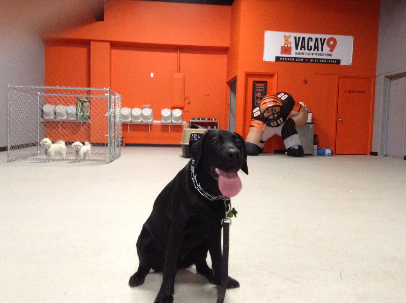 Dog Training Facility with George